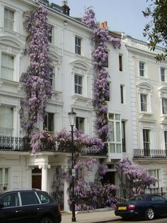 Wisteria love | London town house
