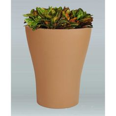 Allied Molded Products Tulip Round Pot Planter Color: Anastasia Emerald