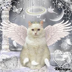 Tuxi is going to present our stories, as we are shelter cats and dogs who went Over The Rainbow Bridge. Please read them. We all want a no-kill nation!. (Picture is White Angel Cat from blingee.com)