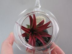 Your place to buy and sell all things handmade Air Plants Care, Plant Care, Hanging Glass Terrarium, Glass Company, Wonderful Things, Garden Inspiration, Things To Come, Create, Simple