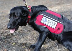 Trainers teach dogs to protect people with latex allergies