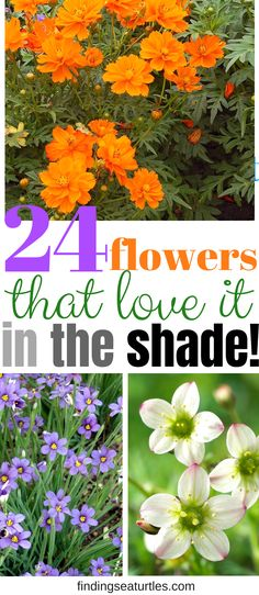 24 Spectacular Shade Garden Perennials - Finding Sea Turtles Perennials that thrive in a shady garden. Shade perennials prized for blooms or foliage. Don't sacrifice style or design. Part Shade Perennials, Flowers Perennials, Planting Flowers, Flower Gardening, Shade Flowers Perennial, Shade Annuals, Full Sun Perennials, Flower Garden Design, Succulent Gardening