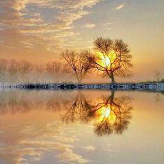 Tree Magic ....by Brittany W