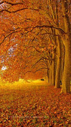 Beautiful Lausanne in Autumn, Switzerland