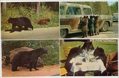 4 - Black Bears