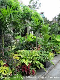 62 Amazing Fresh Frontyard and Backyard Landscaping Ideas We've compiled a collection garden styles to help get you started planning the garden you've always dreamed about. Tropical Backyard Landscaping, Tropical Garden Design, Florida Landscaping, Tropical Plants, Front Yard Landscaping, Landscaping Ideas, Backyard Ideas, Garden Ideas, Tropical Gardens