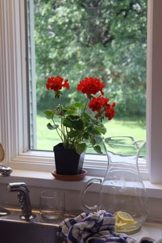 Red flowers on the windowsill.