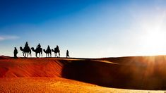 Perplex about how to #TravelMorocco? See our Link and know how to create a most excellent #MoroccoDayTour with #CamelSafaries.  http://articles.org/experience-morocco-day-tours-with-morocco-excursions/