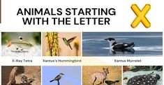 Animals that Start with X Alphabetical List Of Animals, Ground Squirrel, Visual Dictionary, Water Pollution, Sea Birds, Baja California, Freshwater Fish, Pet Names, Central America