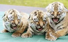 """Rawwr! We're scawy!"" Aww, don't ever grow up, you three!"