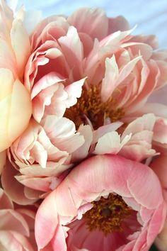 Pretty Pink - *bellaMUMMA {life is beauty-full}