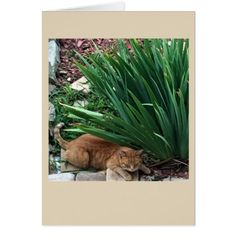 #personalize - #Cat Photo Card