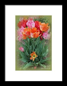 "#Tulips Framed Print featuring the photograph ""Bouquet Of Colorful Tulips"" by Dora Sofia Caputo Photographic Design and Fine Art #spring"