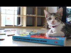 School Kittens and Best Friends Animal Society - YouTube