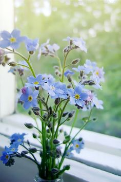 "I love this flower, her name is ""Forget Me Not"""