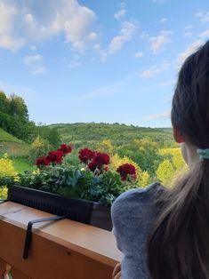 Pensiunea Glodeanca, pentru totdeauna in sufletul nostru! Plants, Plant, Planets