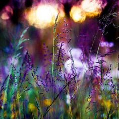 Image uploaded by shooting star. Find images and videos about cute, nature and flowers on We Heart It - the app to get lost in what you love. Samhain, Art Et Design, All Things Purple, Summer Solstice, Bokeh, Beautiful World, Beautiful Places, You're Beautiful, Beautiful Scenery