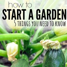 Are you ready to grow a garden - learn how to start a garden - here are 5 things you need to know to start a garden.