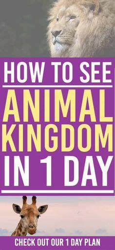 Disney World's Animal Kingdom Plan: How to Plan Your Day at Disney World's Animal Kingdom
