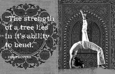 """""""The strength of a tree lies in its ability to bend"""" ~ Zen proverb #yoga #inspiration"""