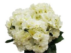 5 x Ivory Hydrangea Bush $33.00 ea. Centerpiece and Bridesmaids bouquet.