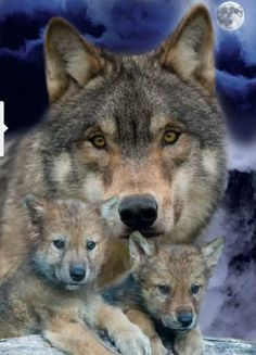 WOLF FAMILY <3<3<3<3 #SaveTheWolves PLEASE!!!!!!!