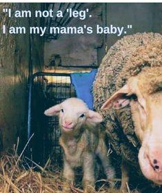 Vegan Facts, Vegan Memes, Save Animals, Animals And Pets, Vegan Marshmallows, Vegan Animals, All Gods Creatures, Animal Cruelty, Animal Welfare