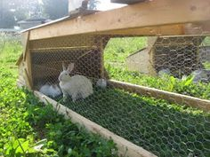 Pastured rabbits. Hmm. Always thought about rabbits but didn't want them to live in a cage and eat unnatural food.