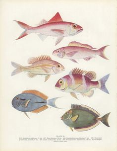 Antique Fish print is colorful and has a nice balance. Fish could be used individually, on crafts or printed as is for great wall art...