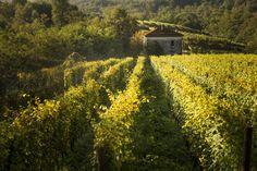 Le Piane Weingarten Boca Italien