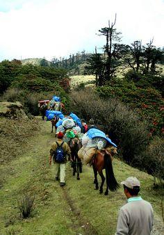 Sandakphu Trek - Darjeeling, India