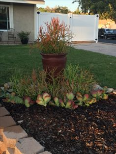 Sticks  of Fire and Paddles. Succulents and containers. Small area gardening spaces.