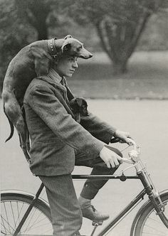 man with 2 dogs on bike by the ghost of me, via Flickr