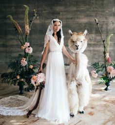 "829 Likes, 24 Comments - WeddingLlamas (@weddingllamas) on Instagram: ""Brides & alpacas. Is there anything sweeter? . photographer: @katrinathaxton Production…"""
