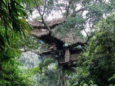 scary tree house resort oregon