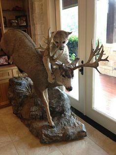 Would look perfectin my living room!!    Sweet Mule Deer and Cougar Mount | HuntDrop
