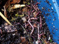 Manual de vermicompostaje. Cómo hacer vermicomposteras y humus de lombriz. Guía práctica - Worm Composting, Garden Compost, Meat, Pallets, Food, Compost, How To Build, Planters, How To Make