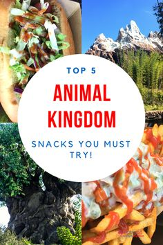 5 animal kingdom snacks you must try