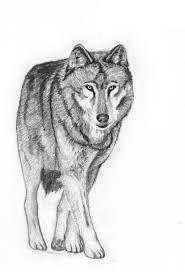 """Képtalálat a következőre: """"easy drawings of wolves in pencil"""""""