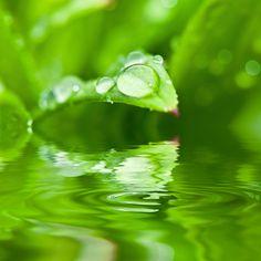 auch für die Pflanze Silberwasser hilft gegen Pflanzenerkrankungen und tötet Viren und Bakterien durch das Besprühen oder durch die Aufnahme des Silberwasser über die Wurzeln. Somit kann eine höhere Lebensdauer erwartet werden.