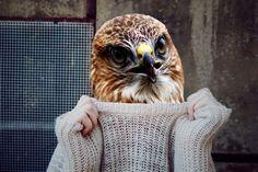 Basic First Aid, Pet Clinic, Goldfinch, Parakeet, Bird Species, Bird Feathers, Birds In Flight, Pet Birds, Your Pet