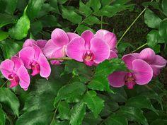 imagenes  | Flores hermosas fondos de pantalla, fondos de escritorio