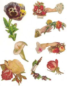 Vintage Flower Scraps