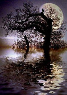 Old tree, water, and the moon. Moon Photos, Moon Pictures, Pretty Pictures, Moon Pics, Beautiful Moon, Beautiful World, Shoot The Moon, Sun Moon, Moon Shine