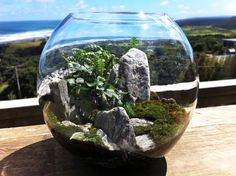 Mini Eco-Systems - cooler than they soundfrom Fancy NZ Design Blog