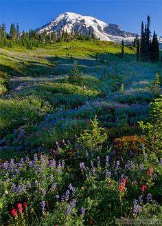 """Mount Rainier Meadow"" Washington, USA"