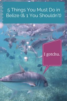 According to this little fishy, and also me...these are Five Things you MUST do in #Belize (& One Thing You Shouldn't...)! Check it out, I spent over two weeks in Belize and I got 5 on it.