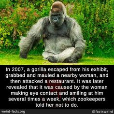 Verified mind blowing facts, cool and weird stories and news around the world. True Interesting Facts, Unusual Facts, Interesting Reads, Creepy Facts, Wtf Fun Facts, Funny Facts, Scary, Animal Facts, Animal Memes