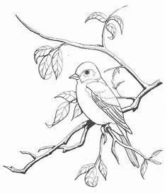 Burgess Bird Book