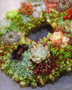 Succulent Wreath -- this could live on my front door year round. Easy to make but takes a lot of plants.  by Martha Stewart Crafts